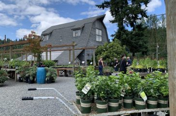 Gray Barn Nursery is having its best ever year of sales (Photo by Michelle Johnson)